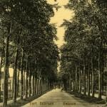 Random image: ca 1910 (16)